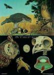 Ragadozó madarak oktatótabló