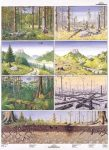 A veszélyeztetett természet 1-2. DUO