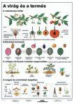A virág és a termés DUO