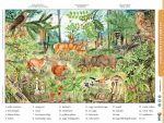 Az erdő életközössége
