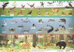 Magyarország vadon élő állatai / Magyarország állatvilága asztali alátét A3 duo