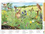 A mező életközössége + munkaoldal tanulói munkalap