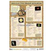 Nemi betegségek 2.-3. (vírusok) / (bakteriális fertőzések) tanulói munkalap