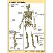 Az emberi csontváz I-II. DUO tanulói munkalap
