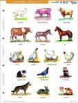 Ház körül élő állatok + munkaoldal tanulói munkalap