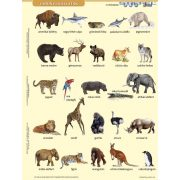 Vadon élő állatok lefűzhető tanulói munkalap+munkaoldal