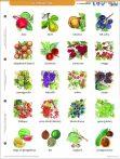 Gyümölcsök + munkaoldal tanulói munkalap