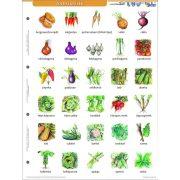 Zöldségek + munkaoldal tanulói munkalap