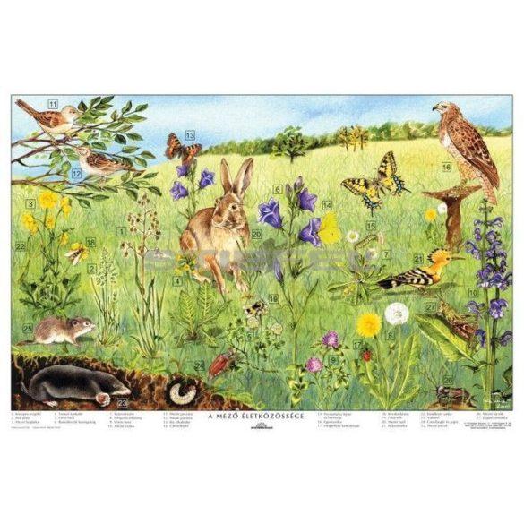 A mező életközössége faléces tabló