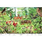 Az erdő életközössége oktatótabló poszter