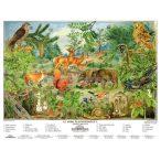 Az erdő életközössége faléces tabló