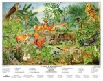 Az erdő életközössége fémléces, fóliázott