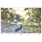 A folyóvíz életközössége faléces tabló