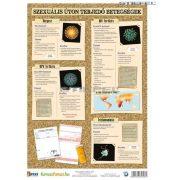 Nemi betegségek 2. (vírusok) - oktatótabló