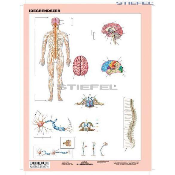 Az idegrendszer
