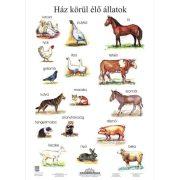 Ház körül élő állatok falitabló poszter