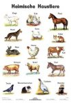 Heimische Haustiere