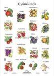 Gyümölcsök tabló poszter