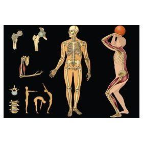 Az emberi test