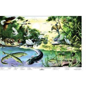 Természetismeret tablók