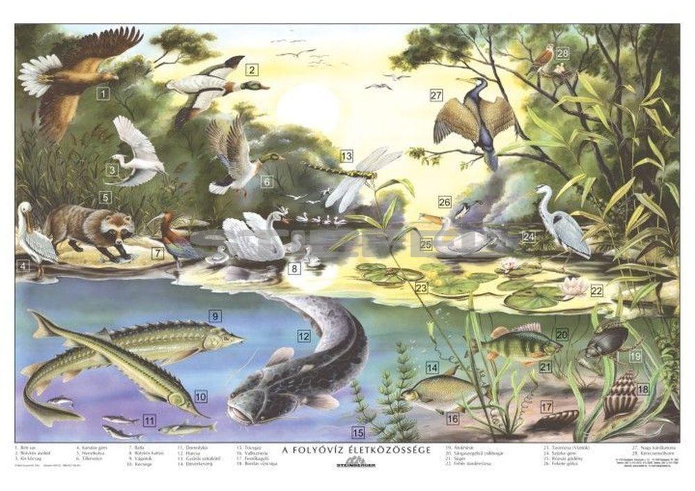 A folyóvíz életközössége